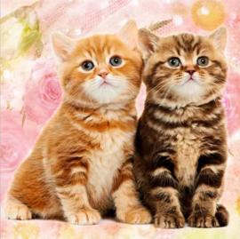 Diamond Painting 5D - Twee schattige kittens - 30x30 cm