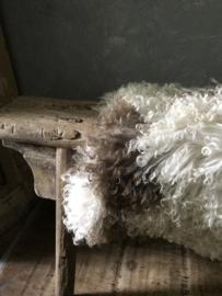 Krul schapenvacht