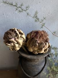 Gedroogde artichoke