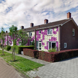 Bloemengevels in plantenstraten, Lent