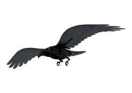 Raven Adam