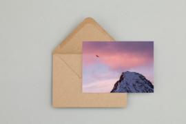 Ansichtkaart - Eagle & pink