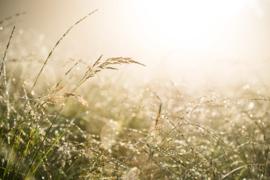 Fine Art - graslandschap met dauw