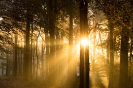 Fine Art - golden sun