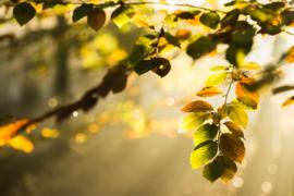 Fine Art - Fall Forest