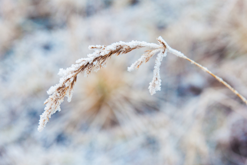 grass & snow