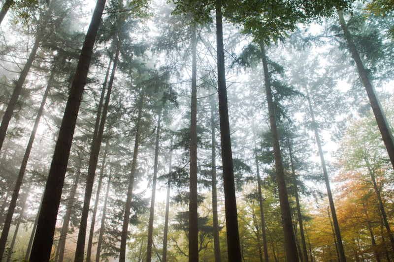 Fine Art - Forest