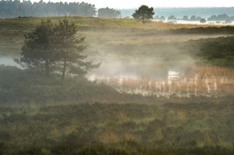 Fine Art - Heide met mist