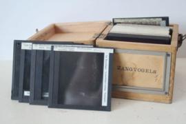 Antiek kistje met 22 antieke glas negatieven van zangvogels