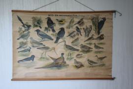 "H.J. Slijper - W.J. Thieme & Cie -Schoolplaat "" Bos en Weidevogels """