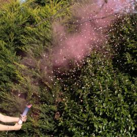 Confetti Kanon roze rook en confetti