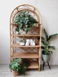 Wandrek bamboe | rotan
