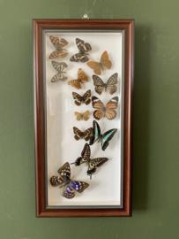 Vlinders in bruine lijst 2