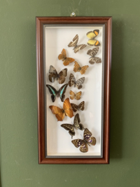 Vlinders in bruine lijst 1
