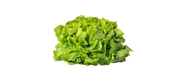 Biologische Eikenbladsla groen | 1 stuk