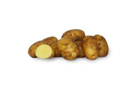Biologische Aardappel Agria | 1 kg