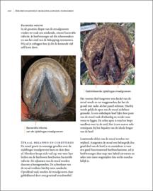 Hoefbevangenheid: Begrijpen, genezen, voorkomen'  - Remco Sikkel (nieuwe uitgave 2018)