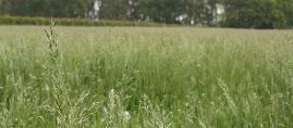 Weidegang en gras, hoe zit dat?