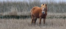 7 Tips om je paard te laten afvallen in de winter