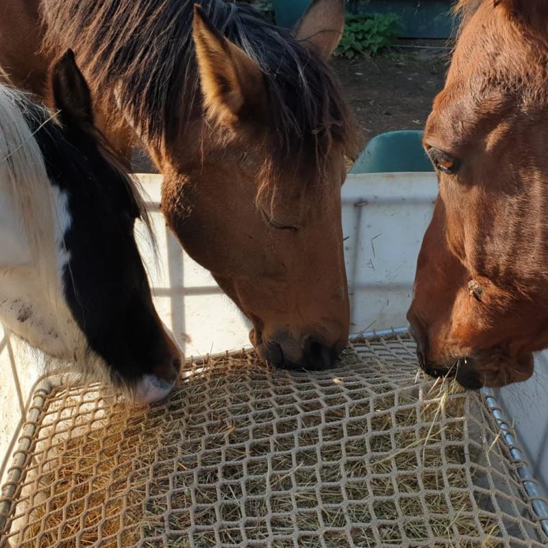 PaardEerlijk® - Slowfeederrek (DIY-pakket)