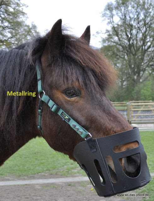 AS das Pferd leren graasmasker