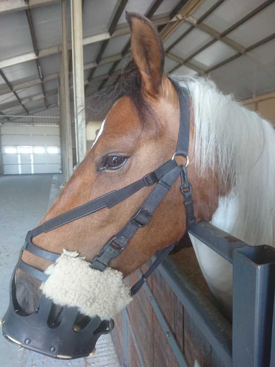 AS das Pferd lederen graasmasker met neusriem