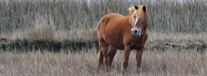 paard in de winter laten afvallen