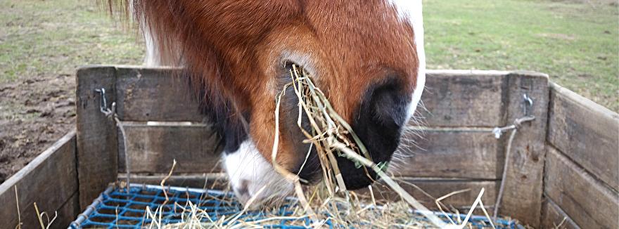 de beste slowfeeders van paardeerlijk