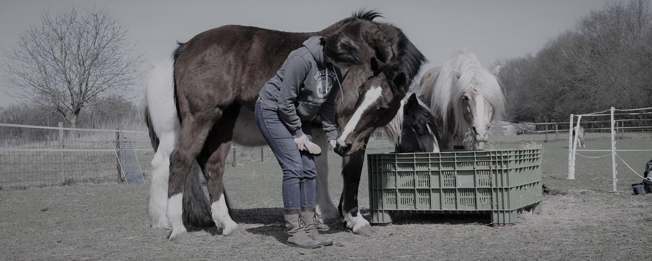 over paardeerlijk
