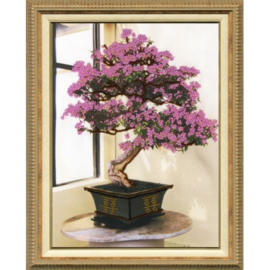 KRALENBORDUURPAKKET BLOOMING BONSAI S/RT010