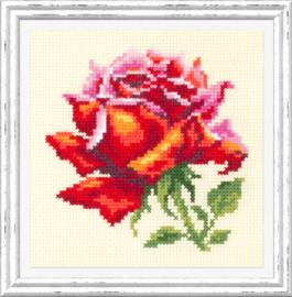 BORDUURPAKKET RED ROSE - CHUDO IGLA