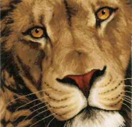 Animals - Koning der Dieren