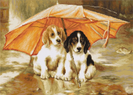 COUPLE UNDER AN UMBRELLA (aida)