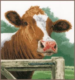 Animals - Verwonderde Koe