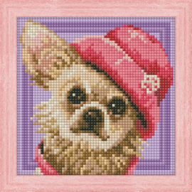 DIAMOND PAINTING KIT CHIHUAHUA AZ-1569
