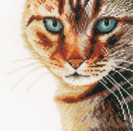 Animals - Kat