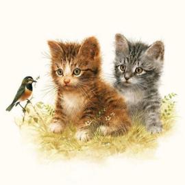 Ambiënte servetten 5st - Kittens 33x33cm