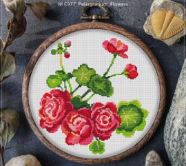 BORDUURPAKKET PELARGONIUM FLOWERS - C977 VANAF 10,95