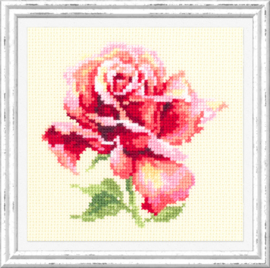 BORDUURPAKKET (M) BEAUTIFUL ROSE - CHUDO IGLA