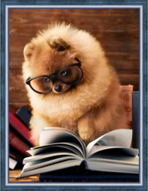 READING POMERANIAN (30 x 40 cm)