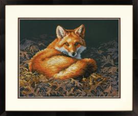 SUNLIT FOX - Dimensions (USA)