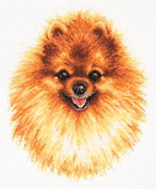 DOG: POMERANIAN