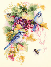 BLUE JAY AND GRAPES