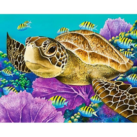 YOUNG GREEN SEA TURTLE WD2428 48 x 38 cm