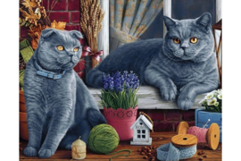 BRITISH SHORTHAIR CATS WD2483