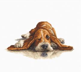 DOG: BASSET (aida)