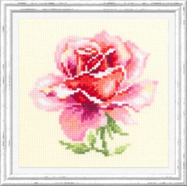 BORDUURPAKKET (M) PINK ROSE - CHUDO IGLA