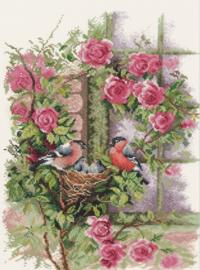 Animals - Vogelnestje