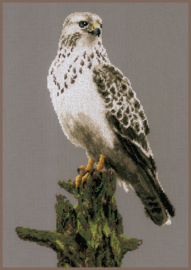 FALCON - LANARTE - ANIMALS