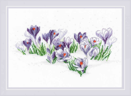 BORDUURPAKKET CROCUSES UNDER THE SNOW - RIOLIS